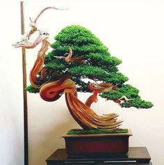 Deadwood bonsai