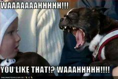 Dog's had enough waaaaah...