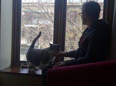 Bonnie Cat | Pawshake Montreal