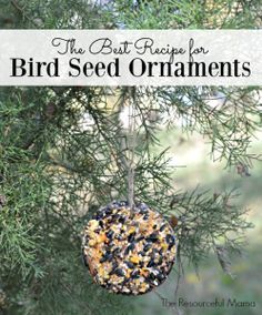 The best recipe for WINTER homemade bird seed ornaments. Get the kids involved and make these ornaments for Christmas gifts. Bird Suet, Bird Seed Feeders, Bird Feeder Craft, Bird Seed Crafts, Bird Seed Ornaments, Dough Ornaments, Christmas Bird, Diy Christmas Ornaments, Christmas Gifts