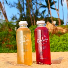 """84 Likes, 4 Comments - Kombucha Hunter (@kombuchahunter) on Instagram: """"Beach life meets booch life. 🌴🌊🍻 Our Maui adventures brought us to another local brand called…"""""""