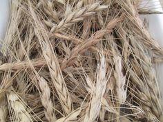 #Escanda #Cereal #DOP #ProductosAsturianos