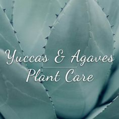 Our website contains an extensive help and advice section to help you care for your plants. Read up on palm tree care, bottle brush care, bamboo care, olive tree care and much more. Agave Plant, Plant Care, Olive Tree Care, Palm Tree Care, Propagating Succulents, Cacti And Succulents, Bamboo Care, Mediterranean Garden, Gardens