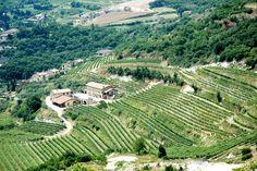 The hills of Valpolicella (http://www.venice-italy-veneto.com/valpolicella-wine.html)