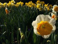It's the start of A Million Blooms at Lewis Ginter Botanical Garden -- want to come help us count? ;)