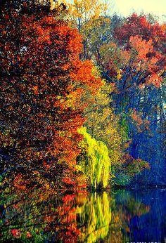 Autumn Colors Photograph  - Autumn Colors Fine Art Print