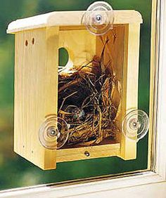 Birdhouse to watch everything from inside your window! Great for kids/pets!