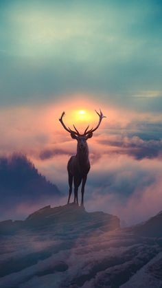 Wallpaper - I believe I can fly - Wallpaper Gamer, Deer Wallpaper, Sunset Wallpaper, Animal Wallpaper, Nature Wallpaper, Wildlife Wallpaper, Deer Photos, Deer Pictures, Animal Pictures