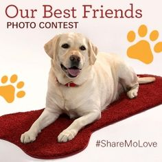 Share a photo of your precious pup with #sharemolove, and you'll be entered to win a SmartStrand Dog Bone rug and $100 Petco gift card. Now through Feb. 15th, 2014. Click to see more details.