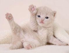 gatos fofos - Pesquisa Google