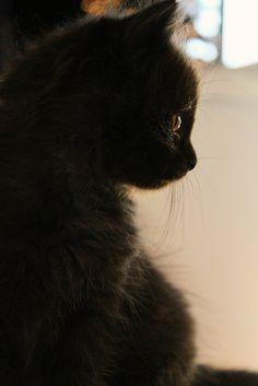 sweet profile . Baby. #Black #Kitten #cute .