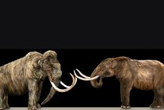 What's the Difference Between a Mammoth and a Mastodon? | Mental Floss