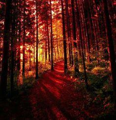 Crimson Forest, Finland