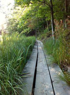 Serene and beautiful walk.at Ludington State Park Michigan Travel, Lake Michigan, Places To Travel, Places To Go, Ludington State Park, The Mitten State, Backpacking, Camping, Day Trip