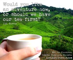 Would you like an adventure now, or should we have tea first?  BOH tea plantation, Cameron Highlands, Malaysia. InsightTravels.com