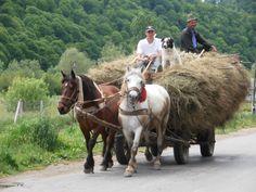 Horsecart, men and shepherd dog