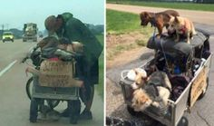 Homeless Man Rescues 11 Dogs And Loads Them Up For A Cross-Country Trip