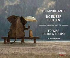 """Your sense of humor is one of the most powerful tools you have to make certain that your daily mood and emotional state support good health Elephant Canvas, Under The Rain, Love Phrases, Magic Words, More Than Words, Spanish Quotes, Teamwork, Positive Thoughts, Beautiful Words"