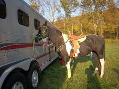 Paint barrel/trail mare - $2500 (Strunk, Ky)