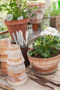 Geraniums for a Pop of Backyard Color White Geraniums in Aged Terracotta Pots - Sofias Bod