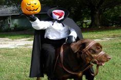 Hilarious Pet Halloween Costumes