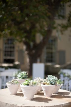 Manor Courtyard #succulents {image courtesy @Abri Kruger}