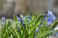 Wednesday around the World Ihanaa toukokuuta kaikille! Happy May all! Beautiful spring flowers everywhere - so lovely!