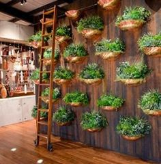 Kitchen Wall Plants Indoor Herbs 44 Ideas For 2019 Herb Garden, Indoor Garden, Vegetable Garden, Indoor Plants, Indoor Herbs, Plant Wall, Plant Decor, Vertical Garden Design, Vertical Gardens