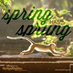 The smell of fresh rain and flowers… spring is in the air! #MonkeyKingdom #FirstDayofSpring