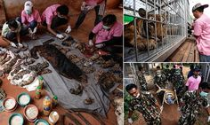 Freezers full of tiger carcasses found at Thailand tourist attraction