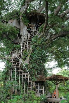 my brother keeps talking about wanting a tree house. I told him we're grown-ups now, we don't need a tree house because we have our own houses... but I'm starting to think he's on to something...