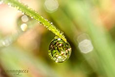tiny world by emmagucci