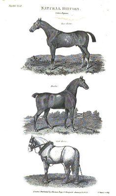 Regency Household: Race, Hunter, and Cart Horses