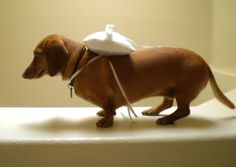 i would never use a dog in my wedding ... but i LOVE wittle wiener dogs !! @Trish Papadakos Theis