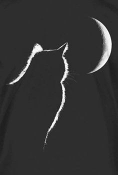 A sure improvement to these long monologues of mine. I Love Cats, Cool Cats, Black Paper Drawing, Black Cat Art, Scratch Art, Cat Drawing, Chalk Art, Shades Of Black, Belle Photo