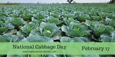 NATIONAL CABBAGE DAY � February 17 - National Cabbage Day is observed annually on February 17th.  Cabbage is versatile and can be eaten raw, steamed or saute'd.  A popular ingredient in Asian, German, Irish and Latin recipes, it's a culturally diverse food.  It's low calories (6 per leaf) makes cabbage a popular diet food as well. It has no fat or cholesterol, is low in sodium and carbs, and is a good source of Vitamin C.
