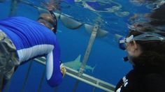 Hawaii Shark Encounters North Shore of Oahu #travel