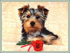 4 Dogs Puppy Puppies Yorkshire Terrier Toy Dog Greeting Notecards/ Envelopes Set