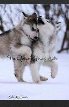 #wattpad #werewolf Kaia Heart is the princess but, at only 16 she still isn't able to accept her royal duties quite yet. Nonetheless that doesn't mean she can't follow her father in his royal duties. After all she is an only child without her mother. Her mother was killed by a treacherous guard that turned out to be...