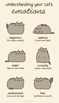 Learn what your cat is telling you.