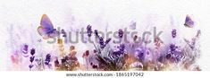 Watercolor Blossoming Lavender Flowers Flying Butterfly Stock Illustration 1865197042 Growing Lavender, Lavender Flowers, Royalty Free Stock Photos, Banner, Butterfly, Watercolor, Purple, Illustration, Artist