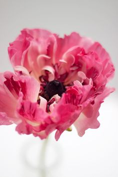 Post Title: Flowerona Reflects…on the month of March Post URL: http://flowerona.com/2014/03/flowerona-reflectson-the-month-of-march/