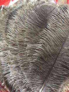 Natural Color/Undyed Ostrich Feathers 12-14 inch Sanitized and Hand-sorted 100 Pieces