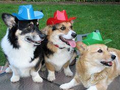 Round'em up Cowboys!!!!