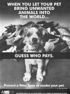 SPAY AND NEUTER!!!!!!