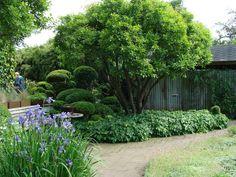 Organic Gardening How To Plants Under Trees, Trees To Plant, Garden Gadgets, Specimen Trees, Fast Growing Plants, Gardening Zones, Gardening Magazines, Garden Landscape Design, Natural Garden