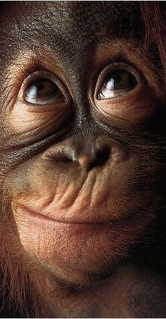 Funny Monkeys Pictures, Monkey Pictures & Photos Funny Monkey Pictures & Pictures of Cartoon Monkeys Funny Cute Cartoon Monkey Pho. Primates, Mammals, Photos Singe, Beautiful Creatures, Animals Beautiful, Cute Baby Animals, Funny Animals, Wild Animals, Monkeys Animals
