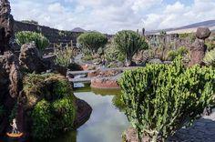 jardin de cactus cesar manrique lanzarote