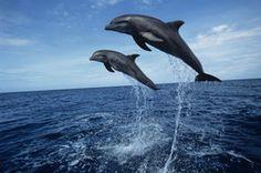 delfines del mar negro
