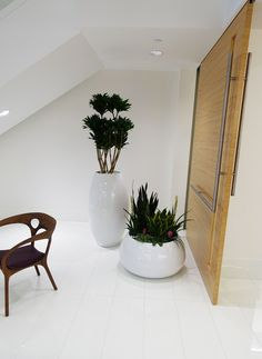Dracaena Janet Craig Compacta Old Town Fibergl Containers Miami Varieties Of Sansevieria And Bromeliads